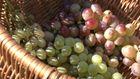 Незвичний музей винограду, де вином лікують від хвороб