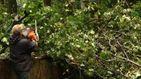 Повалені дерева і рекордна кількість опадів: якого лиха наробила негода у західній Україні