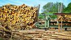 Мы не должны слепо выполнять требования Евросоюза по экспорту древесины, – Борейко