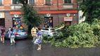 Шалений буревій виривав дерева та трощив авто в Ужгороді