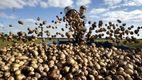 Мінімум затрат і максимум урожаю: секрети вирощування картоплі
