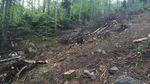 Семерак жахнувся від масштабів вирубки лісів на Прикарпатті
