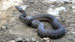 Одразу двоє мешканців Львівщини потрапили до лікарні через укуси змій