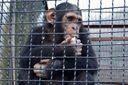 Мавпа відкусила палець немовляті з Маріуполя