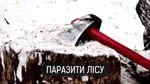 Грошове дерево: як на Миколаївщині нелегальна вирубка дерев стала прибутковим бізнесом