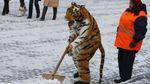 Київ засипало снігом: у соцмережах діляться знімками негоди