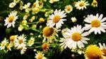 Синоптик розповіла, коли до України прийде справжнє весняне тепло