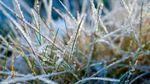 Рятувальники попередили про заморозки у багатьох областях: перелік
