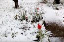 Снігопади атакували Крим: з'явилися вражаючі кадри