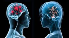 Новая ступень в понимании смерти: ученые попытаются регенерировать мертвый мозг