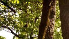 Молния повредила деревья в Киеве: появились фото