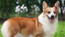 Собак вице-премьера России ввозили в Европу за 40 миллионов рублей