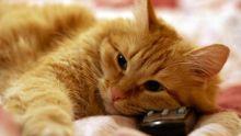Кот возжелал телевизионной славы: смешное видео