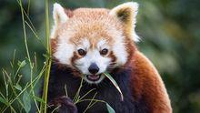 В США показали дуже рідкісних тварин: з