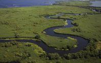 Екологи очистять дельту Дунаю за допомогою рідкісних тварин