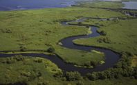 Экологи очистят дельту Дуная с помощью редких животных
