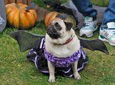 """Halloween-Party: де побувати в """"найстрашніший"""" день року"""