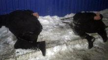 Деталі затримання банди, через яку сталась перестрілка у Княжичах: з'явились фото і відео