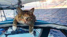 Дівчина з кішкою: неймовірні подорожі з твариною у човні