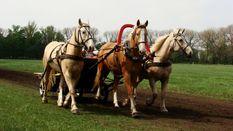 Украинский конный завод, слава о котором ходила на двух континентах