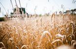 Настоящий хозяин: председатель Винницкой области задекларировал 33 гектара земли