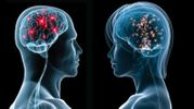 Чем отличается мужской и женский мозг – некоторые пункты вас удивят