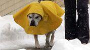 Весною і не пахне: невтішний прогноз погоди на найближчі дні