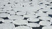 Странное природное явление под Полтавой: река покрылась круглыми льдинами