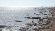 Справжня весна на узбережжі Азовського моря: вражаючі фото