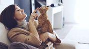 Ученые исследовали, действительно ли коты любят своих владельцев