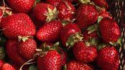 Чи безпечно зараз купувати полуницю