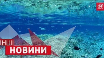 ІНШІ новини. Як звучить музика під водою. Тварини, які полюбляють ванну