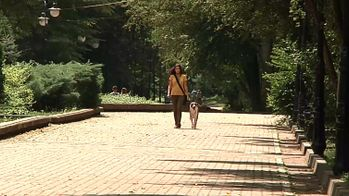 Де мають вигулювати собак їх власники у Франківську