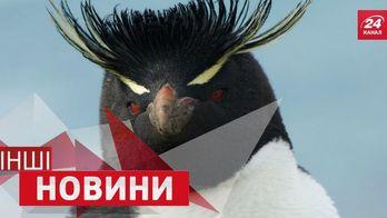 ДРУГИЕ новости. Самый большой стеклянный мост. Пингвин стал генералом