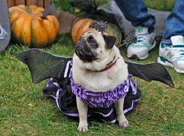 """Halloween-Party: где побывать в """"самый страшный"""" день года"""
