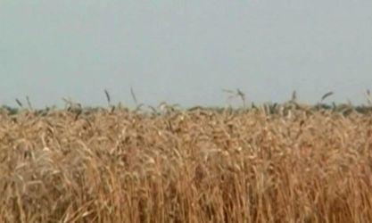 Агроновости. Банки профинансируют аграриев в пределах 12 млрд грн