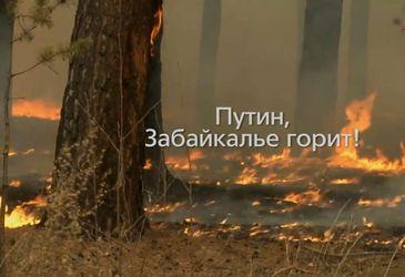 Крупним планом. Чому горить Сибір?