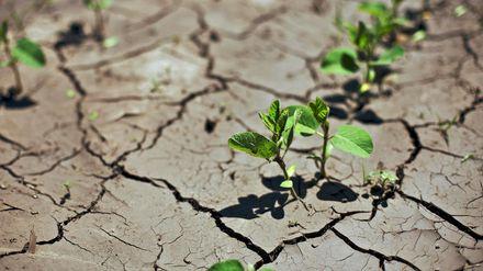 Два роки без води: як в Криму справляються із нестачею прісної води та чого чекати цього літа