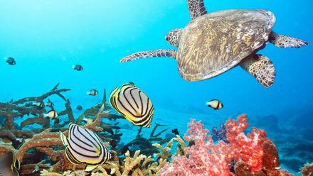 Чем привлекает туристов Красное море