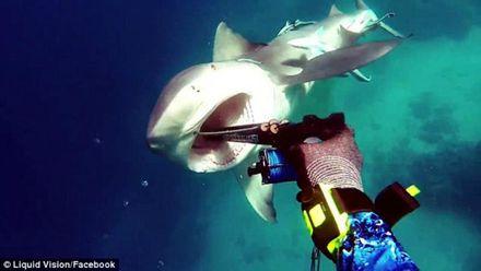 Ошеломляющее видео: дайвер снял на камеру и отбил атаку акулы