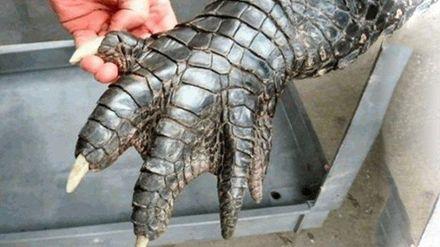 Гигантский аллигатор шокировал пользователей соцсетей