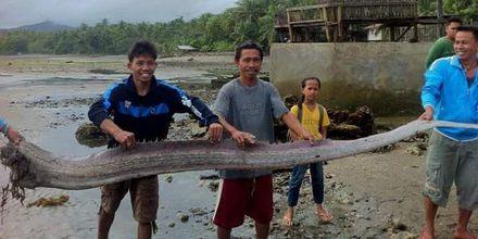 """На Філіппінах спіймали міфічного """"морського змія"""": з'явилися фото"""