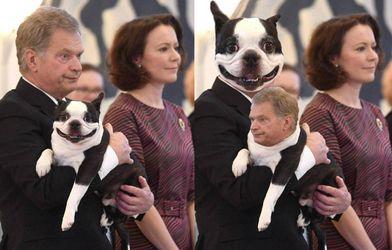 Собака президента Финляндии покорила сеть: фото, которые поднимают настроение