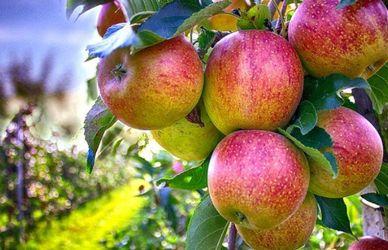 Вчені зробили сенсаційне відкриття про користь яблук
