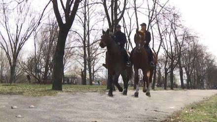 Як у Києві працює кінний патруль