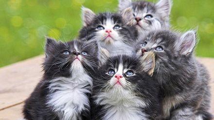 Как владелец 10 котят пытался их сфотографировать: смешное видео