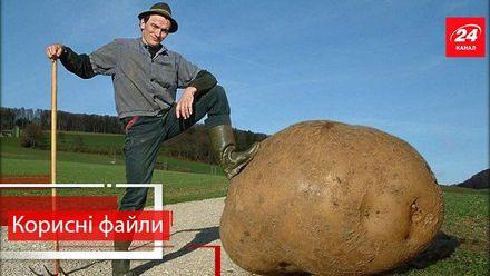 Полезные файлы. Как правильно посадить картошку, чтобы получить хороший урожай