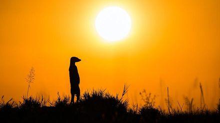 Красота дикой Африки: фантастические фотографии победителя международного конкурса