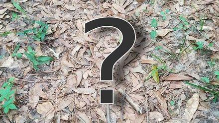 Найти змею: новая загадка покорила интернет