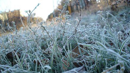 Харьковские ученые рассказали, как уберечь урожай от заморозков и холода